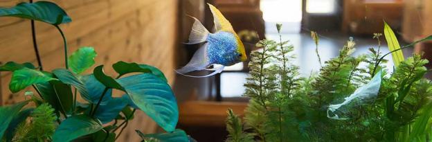 Qual è la migliore illuminazione per un acquario?